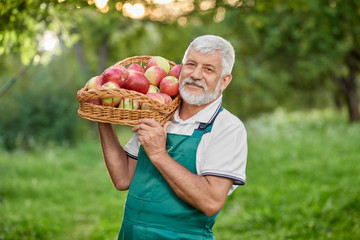 Bearded farmer holding basket with apples on shoulder. Wall mural