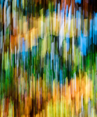 Wall Mural - forest in autumn colors with fall foliage landscape background panning technique