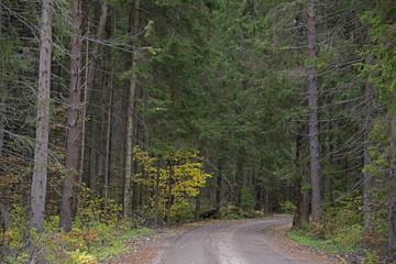 Natural landscape - forest road
