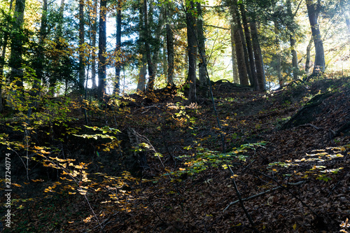 Wall mural forest in autumn colors with fall foliage landscape background