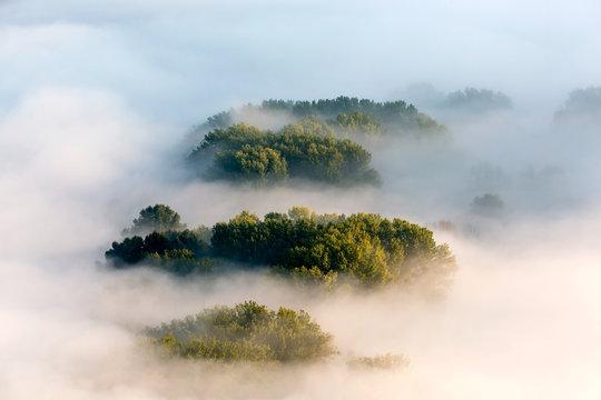 Nebbie sulla foresta all'alba