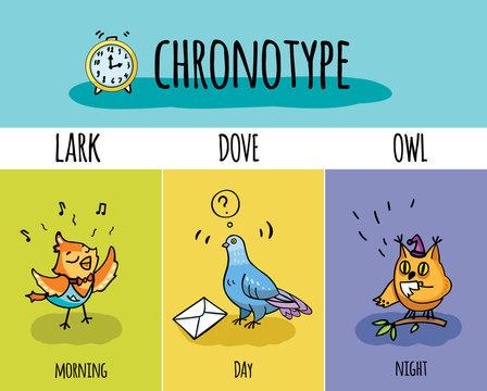 Chronotype of people. Biorhythm. Lark, pigeon, owl. Day and night activity.