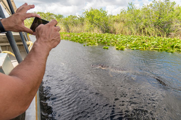 Man photographing close alligator from airboat in Everglades national park, Florida, United States of America