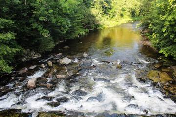 Fluss fließt durch Wald