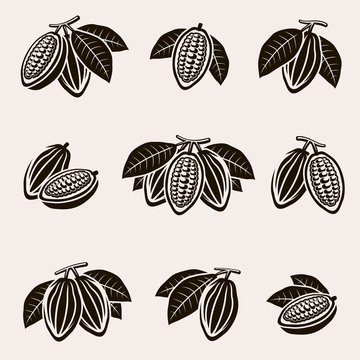 Cacao beans set. Vector