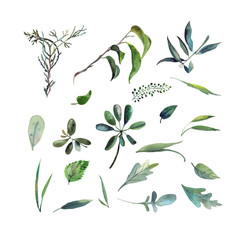 Big set of watercolor wild green herbs on white background
