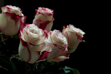 Bouquet of roses on dark background.