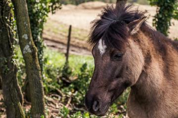 horse, tier, bauernhof, braun, feld, ,  säugetier, kopf, horse, einhufer, gräser, portrait, ponies, hengst, tier, green, horsey, mähne, wiese, wild, weiß, sommer, gesicht Araberpferd, Dressurreiten, F