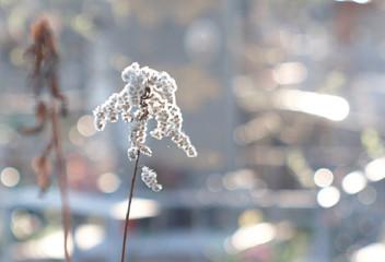 sunlit fluffy white flower