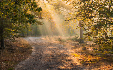 Early morning sunlight In an European Forest with a path and fog