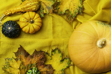 Ripe pumpkins lie on a yellow flaxen cloth among the yellow fallen leaves