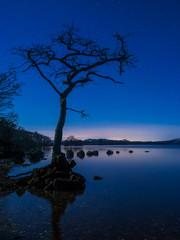 Lone Tree at Loch Lomond