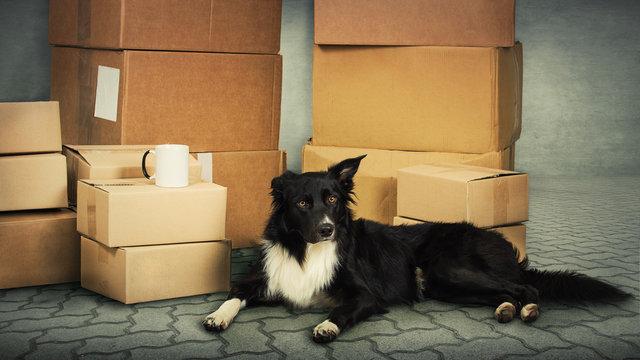 dog home move