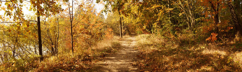 Autumnal panorama. The path running along the bank of the pond is covered with leaves.