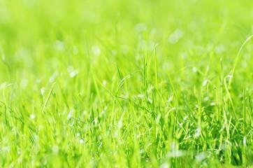 Gras im Sonnenschein, Wiese, Rasen