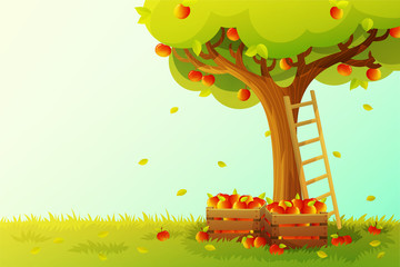 Apple tree harvest in orchard. Wooden ladder and crate full of red apples. Autumn season. Vector illustration