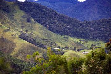 Brazilian tropical landscape