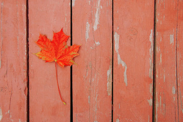 red bright autumn maple leaf on wood surface