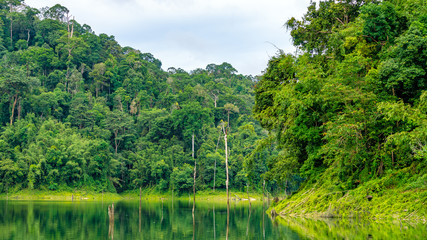 Rainforest landscape with lake