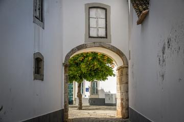 Orange tree in Old Town Faro Portugal
