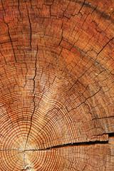 rough cut of tree trunk