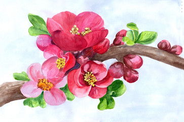 Watercolor. Branches of a flowering tree. Use printed materials, signs, posters, postcards, packaging. Medicinal, perfume and cosmetic plants. Wallpaper. Garden flowers.
