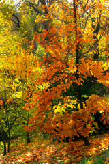Mysterious autumn forest background with magnolia tree