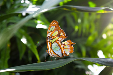 Beautiful butterfly sitting on a plant