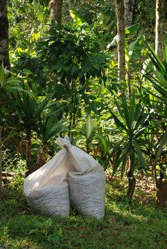 La Selva Negra coffee plantation in Nicaragua