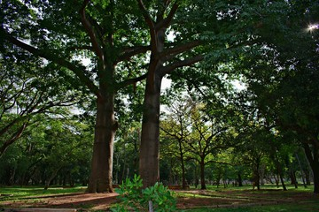 BEAUTIFUL TREES IN LALBAGH