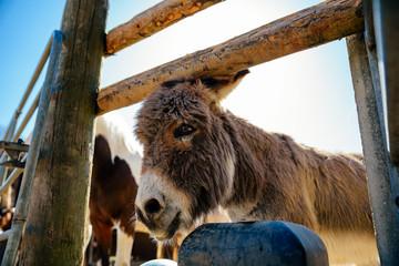 Esel auf dem Pferdehof