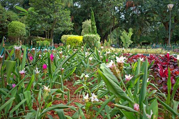 FLOWERS IN LALBAGH