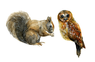 Squirrel and owl watercolor illustration for decor postcard, posters, lettering, invitations and etc.