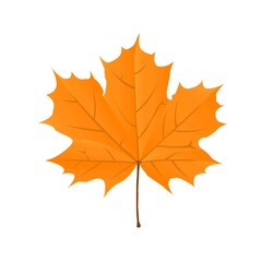 Autumn bright orange maple leaf on a white background. Vector illustration