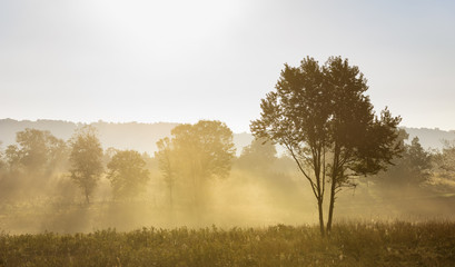 Fototapete - Tree Backlit by Sun on Foggy Morning in Field