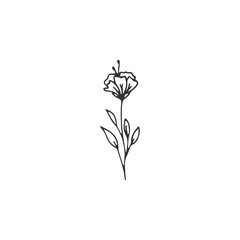 Vector floral hand drawn element in elegant and minimal style.