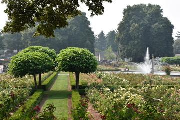 Peninsula Park Rose Garden in Portland, Oregon