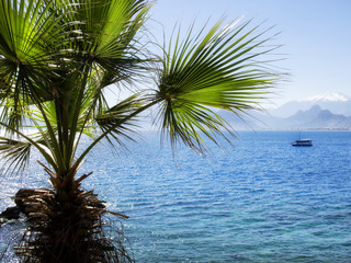 close up palm tree and traveling sailboat on sea in sunny day