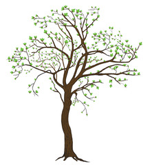 Isolated spring blooming tree illustration