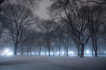 Fresh snow in Central Park NYC