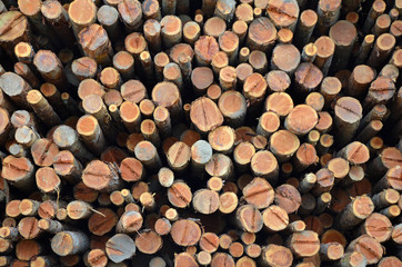 Pile of freshly cut logs at sawmill