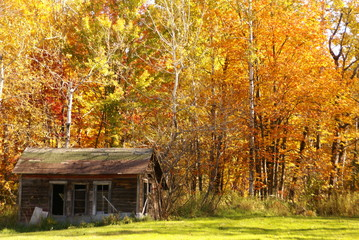 Weathered chicken coop against background of fall trees of red, orange and yellow leaves