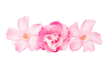 oleander flowers isolated