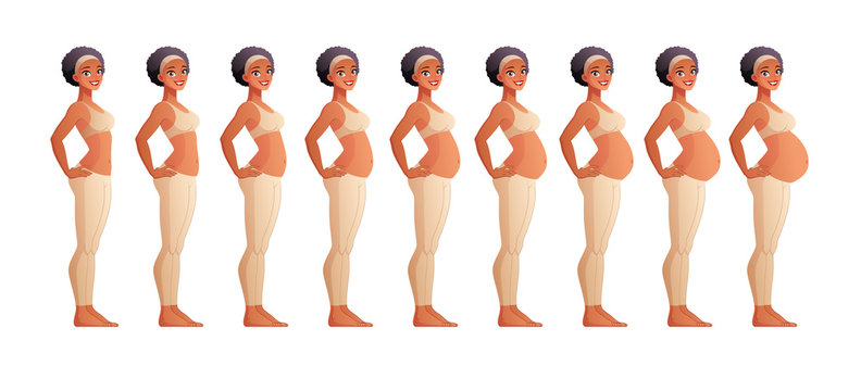 Stages of pregnancy month by month. Isolated vector illustration.