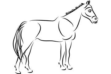 Black and White horse vector illustration design