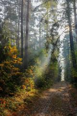 jesień w lesie Warmii