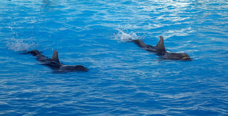 two dolphins are swimming