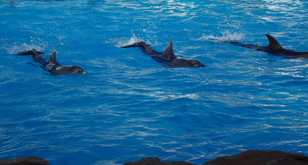 three dolphins are swimming