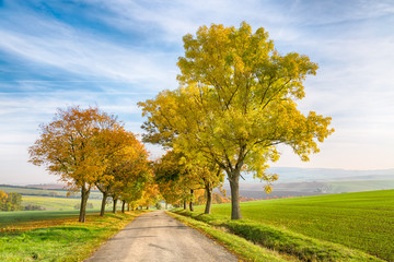 Amazing autumn landscape of country road with colorful trees and blue sky with green grass in South Moravia region, Czech Republic