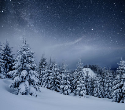 Dairy Star Trek in the winter woods. Dramatic and picturesque scene. In anticipation of the holiday. Carpathian, Ukraine, Europe
